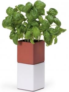 Kräutertopf Evergreen