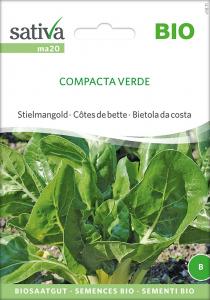 Mangold Compacta Verde