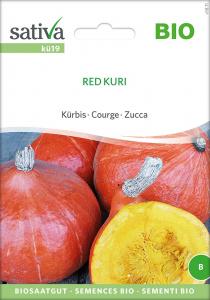 Kürbis Red Kuri