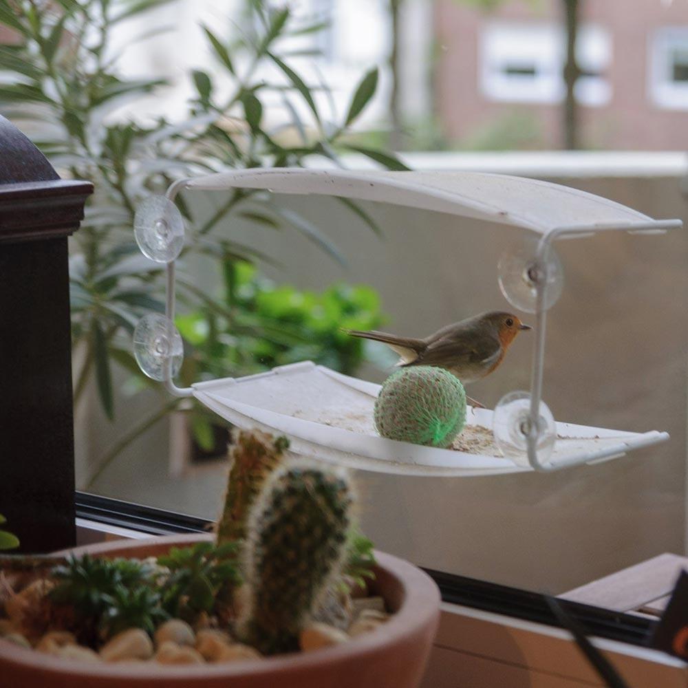 Futterspender am Fenster für Vögel - tazshop