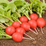 Mein Gemüse ohne Garten