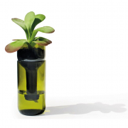 Pflanzglas mit Selbstbewässerung